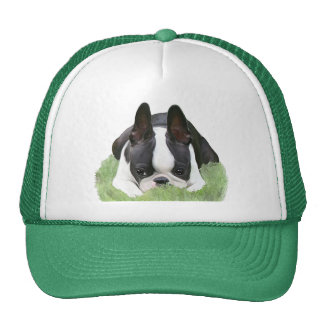 Boston terrier puppy resting mesh hats