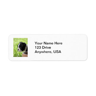 Boston Terrier Puppy Return Address Label