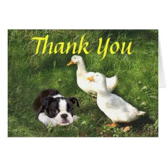 Boston Terrier Puppy Thank You Card Ducks