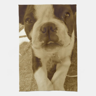 Boston Terrier Puppy Towel