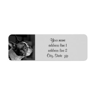 Boston terrier return address label