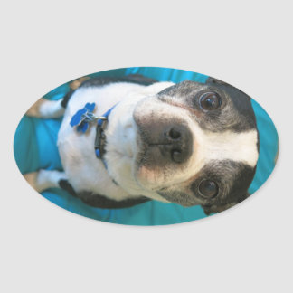 Boston Terrier sitting on a bed Oval Sticker