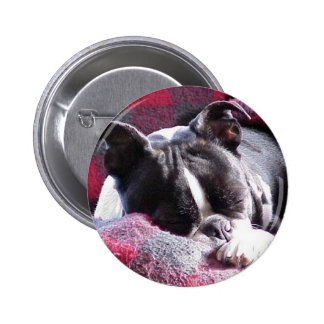 Boston Terrier Sleeping Beauty Pinback Button