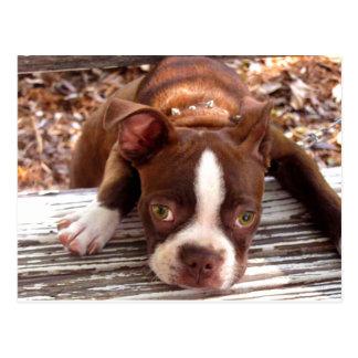 Boston Terrier Sympathy Card