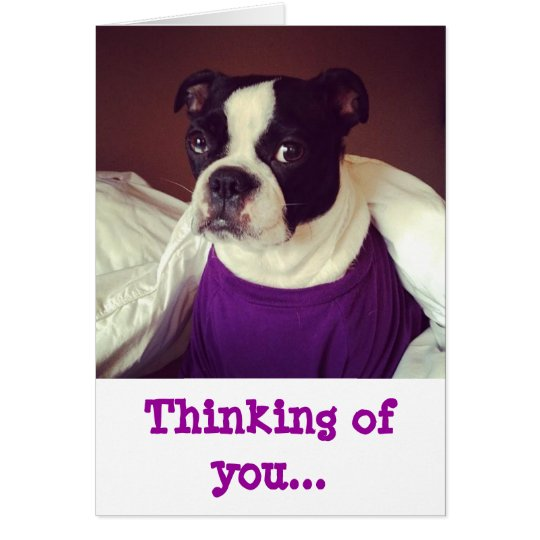 Boston Terrier-Thinking Of You Card