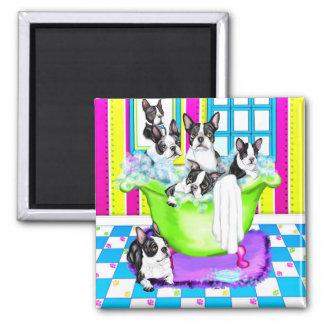 Boston Terrier Tub Full Magnet