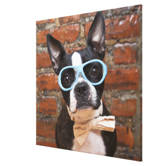 Boston Terrier Wearing Sunglasses And A Bow Tie Stretched Canvas Prints