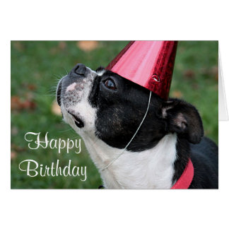 Boston terrier with a birthday wish card
