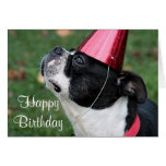 Boston terrier with a birthday wish greeting card