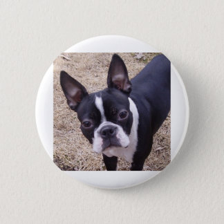 bostonterrier 6 cm round badge