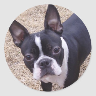bostonterrier classic round sticker