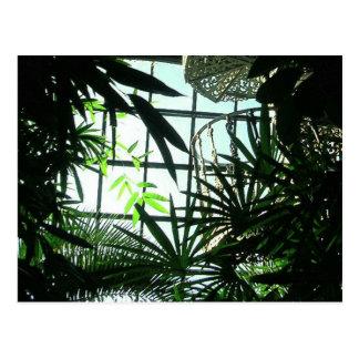 Botanic Stairs Postcard