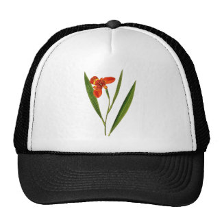 Botanical 02 hats