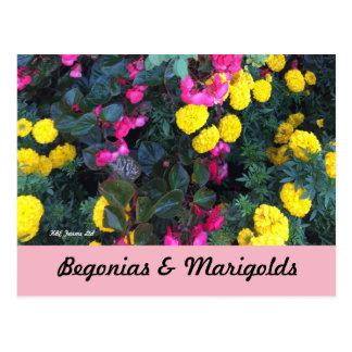 Botanical Begonias & Marigolds Postcard