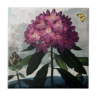 Botanical Blooms The Rhododendron Ceramics Tile