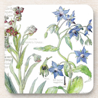 Botanical Borage Herbs Flowers Coaster