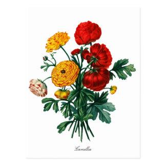 Botanical Camellia Bokeh Postcard