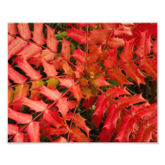 Botanical Close Up - Autumn Leaves - Red Art Photo