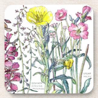 Botanical Evening Primrose Flowers Coaster