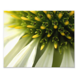 Botanical Flower Photo Print