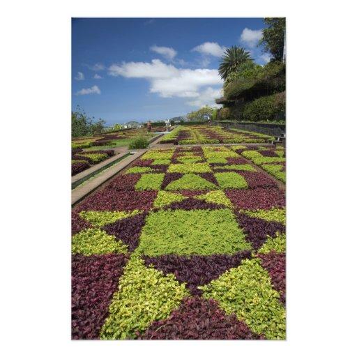 Botanical Gardens, Funchal, Madeira Islands, Photographic Print