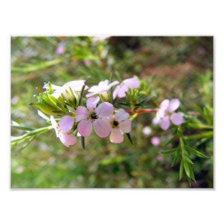 Botanical Gardens II Photograph