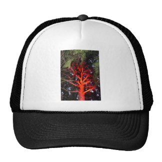 BOTANICAL GARDENS TREE WITH RED LIGHTS HOBART CAP