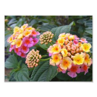 Botanical Gardens V Art Photo