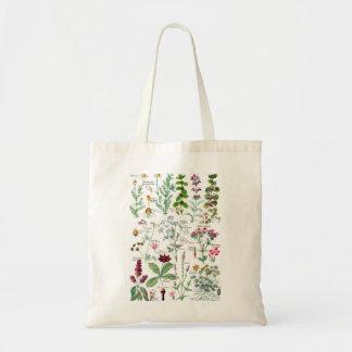 Botanical Illustrations - Larousse Plants