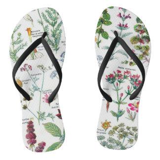 Botanical Illustrations Thongs