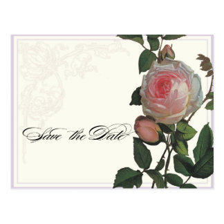 Botanical Pink Rose, Lilac Save the Date Postcard