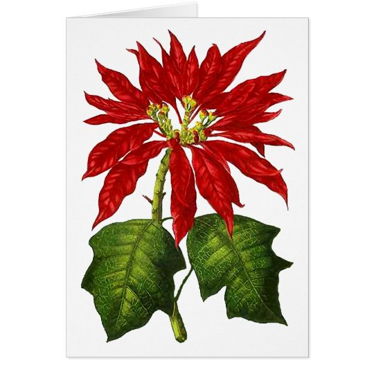 Botanical Poinsettia Greeting Card