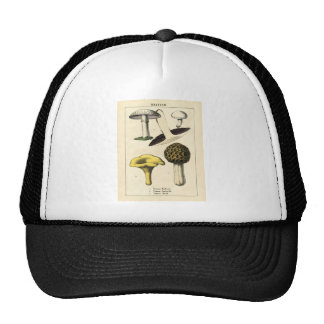 Botanical Print - British Mushrooms & Fungi Cap