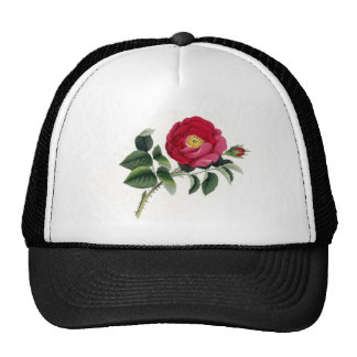 Botanical Print - French Rose (Rosa Gallica) Cap