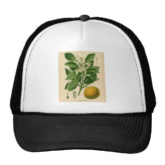 Botanical Print - Sweet Orange Mesh Hats