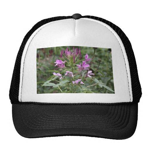 Botanical Series Hat