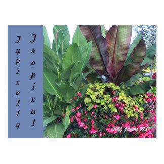 Botanical Typically Tropical Postcard