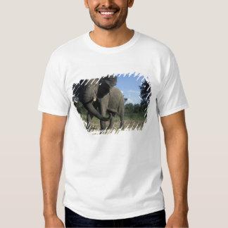 Botswana, Chobe National Park, Aggressive Bull Tee Shirts