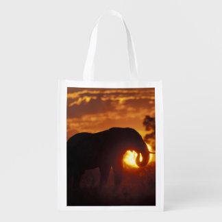 Botswana, Chobe National Park, Bull Elephant