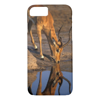 Botswana, Chobe National Park, Bull Impala iPhone 7 Case