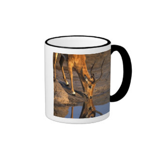 Botswana, Chobe National Park, Bull Impala Coffee Mug