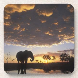 Botswana, Chobe National Park, Elephant Beverage Coasters
