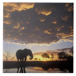 Botswana, Chobe National Park, Elephant Large Square Tile