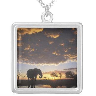 Botswana, Chobe National Park, Elephant Square Pendant Necklace