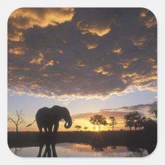 Botswana, Chobe National Park, Elephant Square Sticker