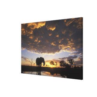 Botswana, Chobe National Park, Elephant Stretched Canvas Prints