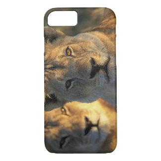 Botswana, Chobe National Park, Lionesses iPhone 7 Case
