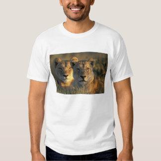 Botswana, Chobe National Park, Lionesses T-shirt