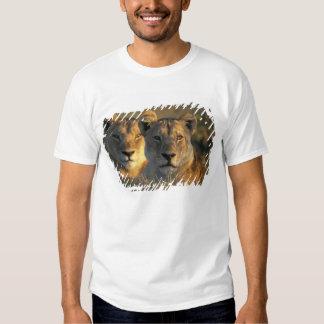 Botswana, Chobe National Park, Lionesses Tee Shirt