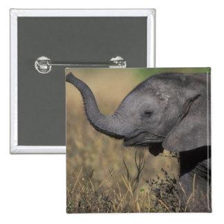 Botswana, Chobe National Park, Young Elephant 15 Cm Square Badge